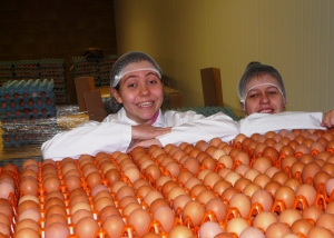 Studens see eggs graded