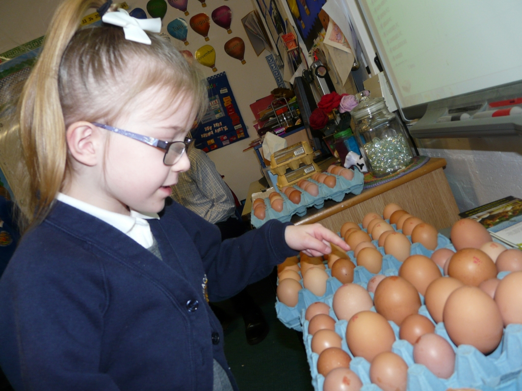 inspecting learner eggs