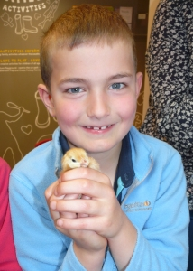 Fergus holds a chick